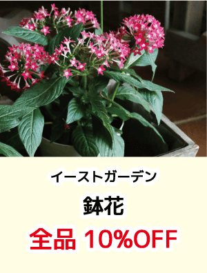 イーストガーデン鉢花