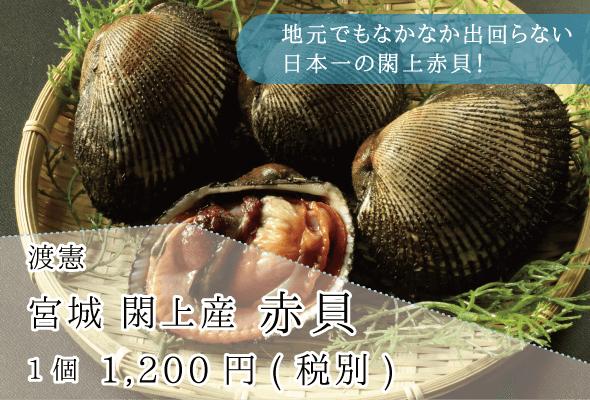 渡憲_宮城閖上産赤貝