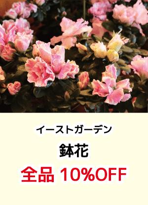 イーストガーデン_鉢花