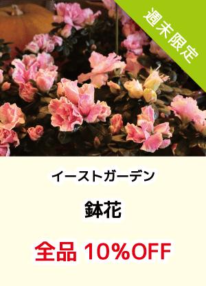 イーストガーデン_鉢花10%OFF