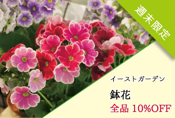 イーストガーデン_鉢花セール