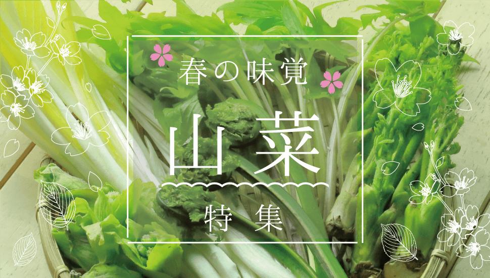 春の味覚 山菜特集