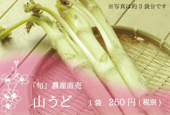 「旬」農産直売 山うど 1袋250円(税別)