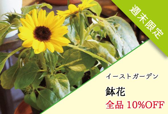 イーストガーデン 鉢花セール