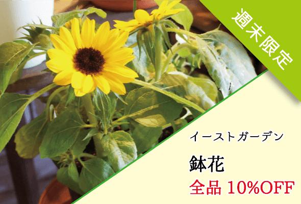 イーストガーデン 鉢花全品10%OFF