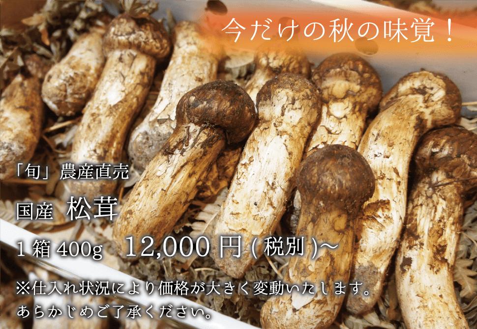 国産 松茸 1箱400g 12000円〜