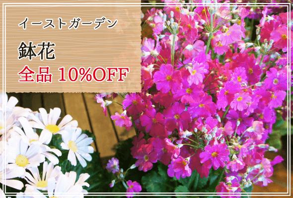 イーストガーデン 週末限定鉢花全品10%OFF
