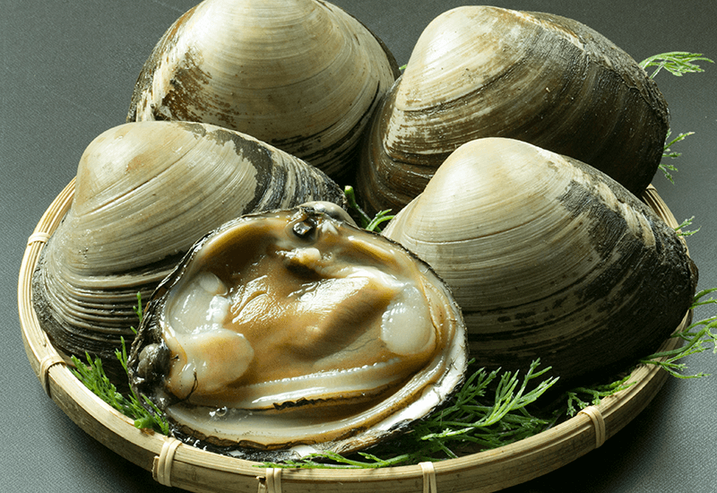 青森県産 ホッキ貝