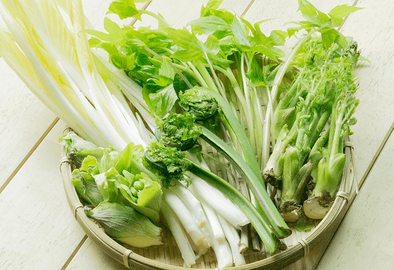 東北産 山菜