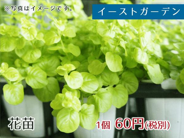 イーストガーデン 花苗 60円(税別)