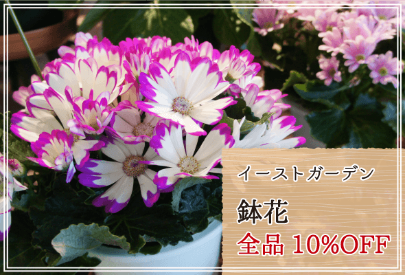イーストガーデン 週末限定鉢花10%OFF