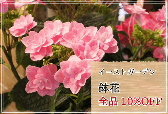イーストガーデン 鉢花10%OFF